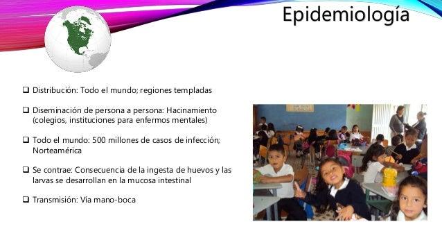 enterobius vermicularis epidemiológia enterobius vermicularis felnőtteknél