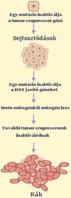 Gasztrointesztinális sztróma tumor (GIST) | edesenegeszsegesen.hu