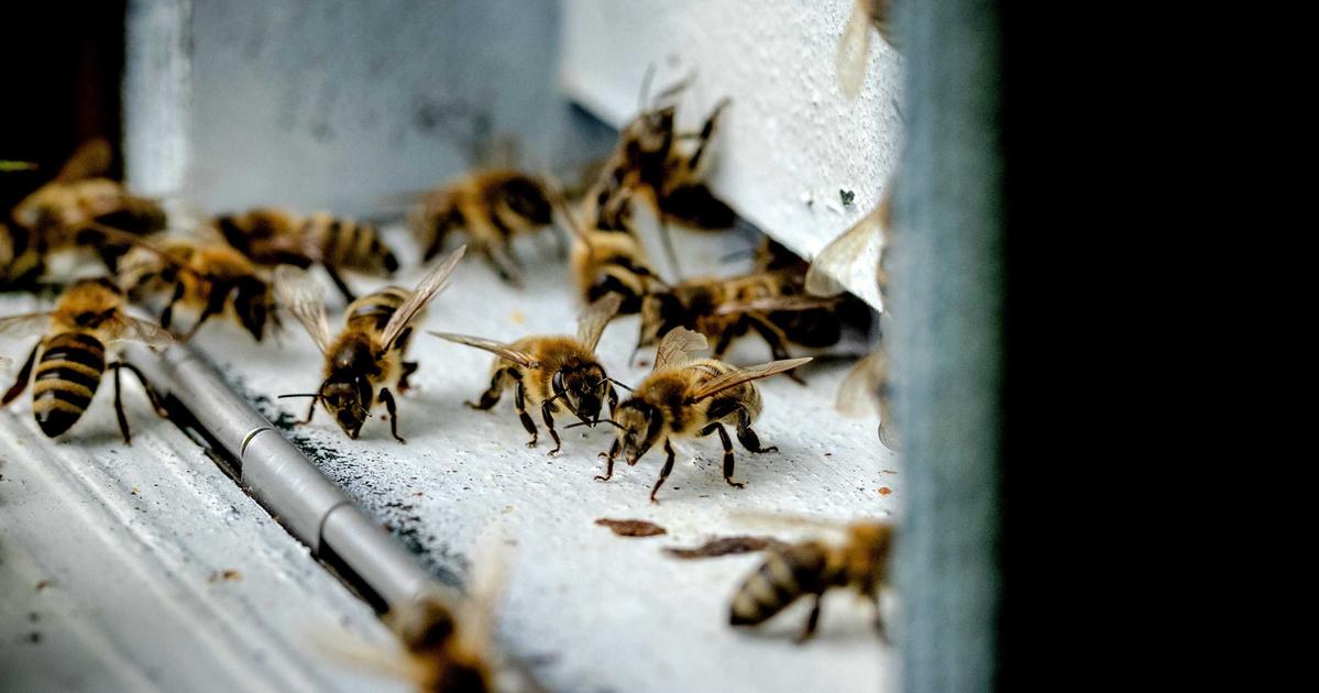 a méh genetikai rákja