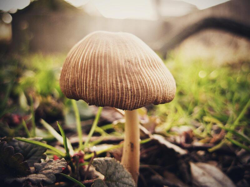 szaprofita parazita gombák természetes méregtelenítő étrend-kiegészítő