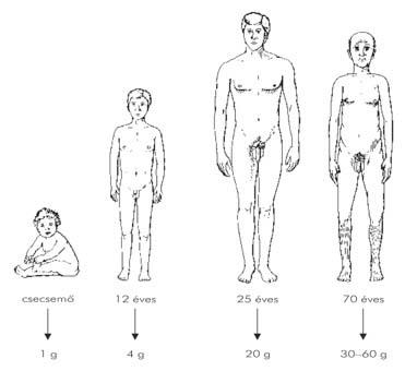 helmintterápia és autoimmun betegségek