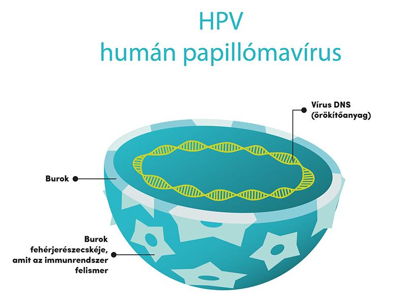 emberi papillomavírus fertőzés gyalog első stádiumú bőrrák