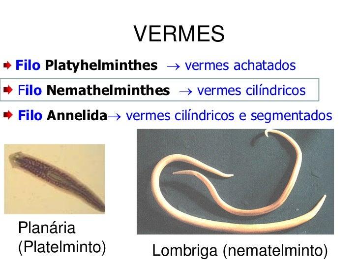 filo dos nemathelminthes