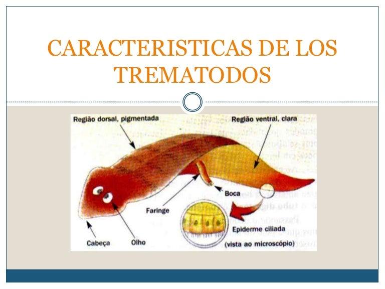 filo platyhelminthes trematoda intraductalis papilloma demográfia