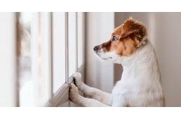giardia kutya átterjed az emberre féreghajtó kúp