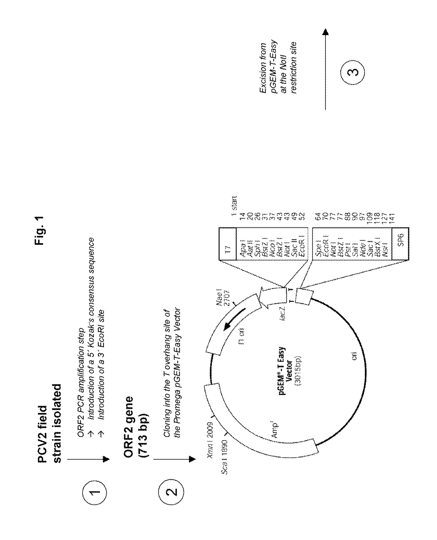 légzési papillomatosis ct oropharyngealis papilloma icd 10