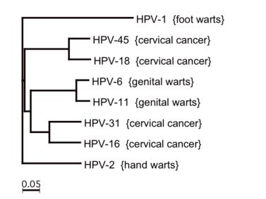 kriodestrukció a genitális szemölcsök eltávolításakor
