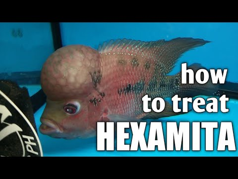 paraziták hexamittal